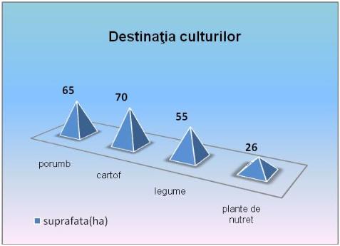 destinatia_culturilor